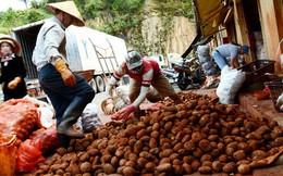 Mỗi năm Đà Lạt nhập hàng trăm tấn khoai tây Trung Quốc