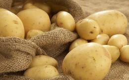 """Nhập khẩu khoai tây Pháp vào Việt Nam, liệu có """"làm khó"""" nông dân trong nước?"""