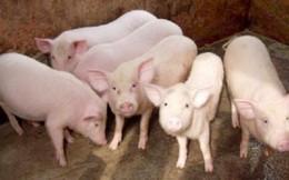 Điều khó tin về giá thịt lợn dịp giáp Tết