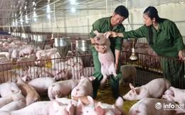 Tiêu thụ hơn 2,2 triệu tấn lợn hơi, đến lượt người nuôi gia cầm than lỗ