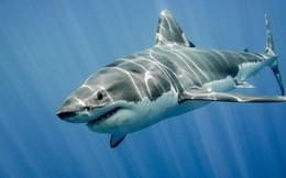 """Nhiều công ty do """"Shark"""" Trần Anh Vương lãnh đạo lỗ liên tục, cổ phiếu """"rẻ như rau"""""""