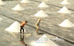 Giá muối tại Bạc Liêu tăng mạnh, chủ vựa 'găm hàng'