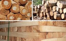 Viêt Nam đứng trước nguy cơ thiếu gỗ nguyên liệu