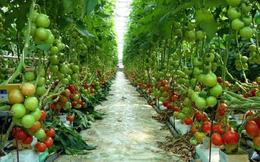 Tín dụng đi vào các lĩnh vực như công nghiệp, nông nghiệp chất lượng cao…thì mới bền vững