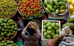 Nông sản Việt thu hoạch 10 hao hụt đến 4, vị chuyên gia này sẽ hiến kế khắc phục vấn nạn trên