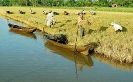 Cần Thơ xin Thủ tướng xóa 259 tỷ lãi vay cho Nông trường Sông Hậu