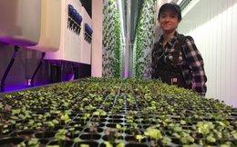 Dự án trồng rau trong container giữa lòng New York của em trai tỷ phú Elon Musk