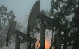 Giá dầu lập đỉnh mới khi OPEC tính tiếp tục cắt giảm nguồn cung