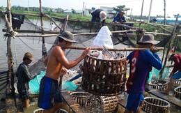 Xuất khẩu thủy sản: Mục tiêu 7,4 tỷ USD và ẩn số thị trường