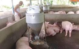 Chăn nuôi: Chi phí cao, chất lượng thấp