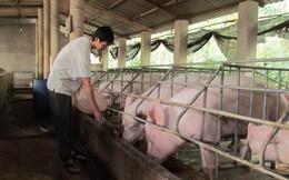 Cố gắng cân bằng cung - cầu thịt lợn trong 2-3 tháng nữa