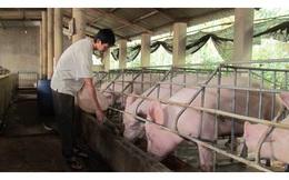 Tiền ầm ầm đổ vào nông nghiệp: Gói tín dụng 100 nghìn tỷ nhưng ngân hàng đăng ký tới 120 nghìn tỷ
