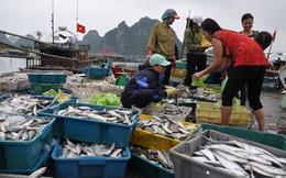 Tiếp tục dừng khai thác hải sản vùng đáy ở 4 tỉnh miền Trung