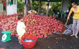 Nhiều loại trái cây chủ lực giảm giá, nhà vườn lao đao