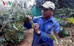 Biến đổi khí hậu ở Tây Nguyên: Người làm nông rát mặt