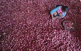 Cà chua và hành tây: Kẻ thù trong cuộc chiến chống... lạm phát tại Ấn Độ