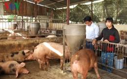 Lần thứ 2 trong năm, người nuôi heo Đồng Nai điêu đứng