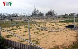 Nông dân trồng rau sạch ở Quảng Bình khốn đốn sau bão lũ