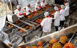 Xuất khẩu rau quả tăng mạnh, đạt 2,84 tỷ USD sau 10 tháng