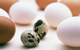 10 cách chế biến trứng cút khiến món ăn trở thành vị thuốc bổ