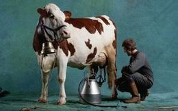 Chuyện người bán sữa bò rong và 6 bài học bán hàng kinh điển dân sales nào cũng cần biết