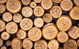 """Ngành nội thất gỗ Việt Nam: """"Rừng vàng"""" liệu có phải là thế mạnh?"""