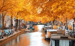 Ngắm những mùa thu lá vàng đẹp nổi tiếng thế giới