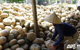 Video: Giá bí đỏ không bằng gói mỳ tôm, nông dân Đắk Lắk khóc ròng