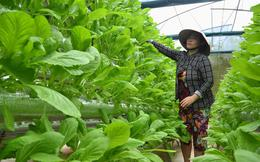 Người đầu tiên trồng rau thủy canh ở Phú Quốc