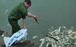 Lào Cai: Khoảng 6 tấn cá chết bất thường nổi trắng nhiều ao nuôi