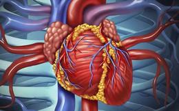"""[Đọc nhanh] Để tránh bị bệnh tim """"nhấn chìm"""", đây là nguyên tắc giúp bạn sống sót"""
