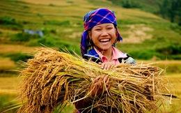"""Động thái mới của Bộ Công thương trong việc """"cởi trói"""" cho hạt gạo"""