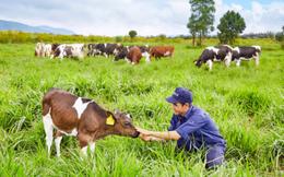 Báo lãi lớn từ khoản đầu tư vào Vinamilk, F&N Dairy tiếp tục miệt mài mua thêm cổ phiếu VNM