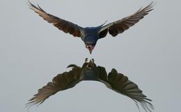"""Chuyện cuối tuần: """"Hiệu ứng chim mồi"""" và việc loại bỏ con chim mồi trong kinh doanh"""