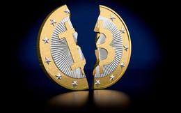 7 đồng tiền ảo lớn nhất đồng loạt rơi bất ngờ, thị trường bốc hơi 20 tỷ USD