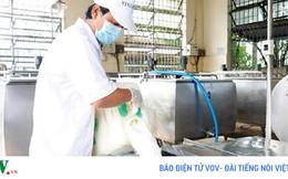 60% nguyên liệu sữa tươi phải nhập từ nước ngoài