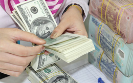 Tiền đồng có khả năng sẽ mất giá 1,5-2% trong năm nay