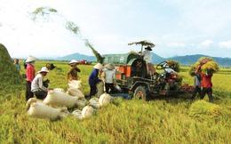 Tạo cuộc cách mạng lúa gạo
