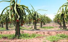 HAGL Agrico (HNG): Trái cây sau 9 tháng hoàn thành nửa kế hoạch năm, biên lợi nhuận giảm mạnh trong quý 3