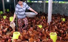 Nửa năm, chi 1,8 tỷ USD nhập thức ăn chăn nuôi và nguyên liệu