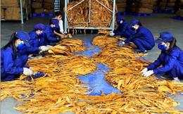 Hạn ngạch nhập khẩu thuốc lá nguyên liệu năm 2018 là hơn 53.000 tấn