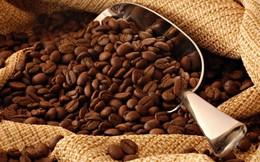 Giá cà phê tăng gần 12.000 đồng/kg trong năm qua