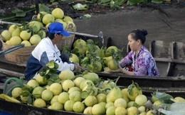 "Trái cây ở ĐBSCL ""sốt"" giá"