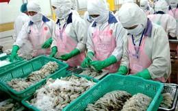 Xuất khẩu tôm sang thị trường Australia nhiều triển vọng