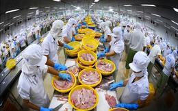 Cá tra nguyên liệu tăng giá, LNST quý 2/2017 của Vĩnh Hoàn (VHC) giảm gần 40%