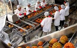 Xuất khẩu rau, quả trong năm tháng đầu năm ước đạt hơn 1 tỷ USD