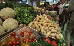 FAO: Nhu cầu lương thực toàn cầu sẽ tăng chậm lại trong 10 năm tới