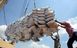 Cân nhắc áp dụng tiêu chuẩn VietGap cho gạo xuất khẩu