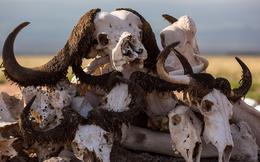 Trái đất đang đứng trước cuộc đại tuyệt chủng lần thứ 6?