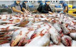 """Tiếp tục """"đi xa"""" kế hoạch lợi nhuận, cổ phiếu """"Vua cá tra Hùng Vương"""" HVG lại lao dốc"""